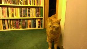 librarycat