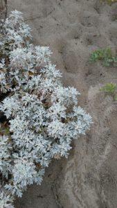 autumnbeachflora